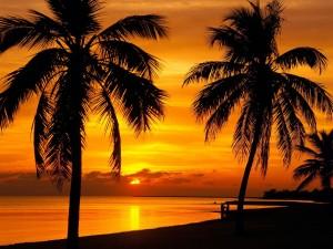 Un atardecer entre palmeras