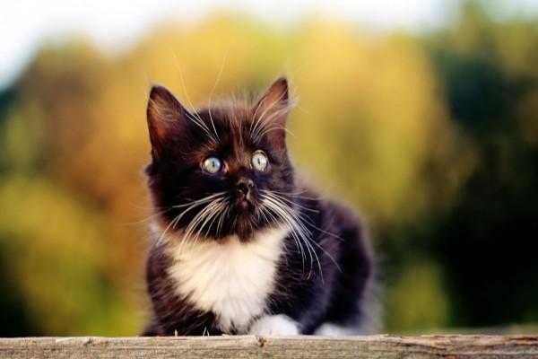 Gatito con largos bigotes