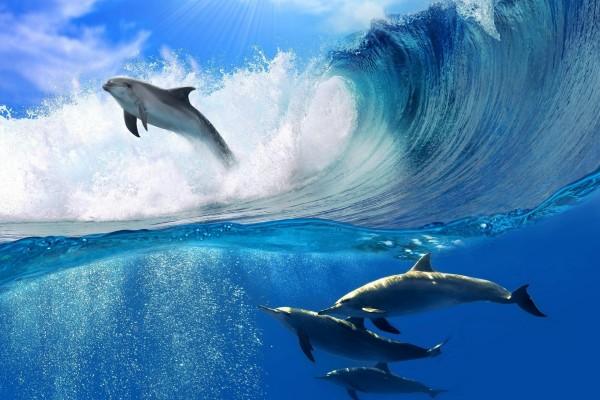 Delfines bajo la ola