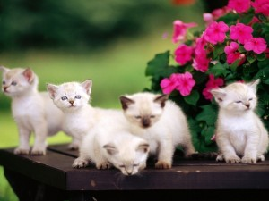 Postal: Cinco pequeños gatitos