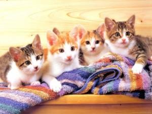 Postal: Cuatro gatitos sobre una toalla