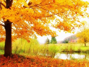 Postal: Campo en otoño