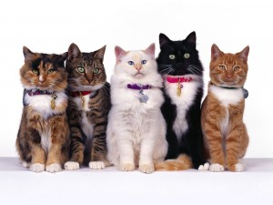 Cinco gatos muy elegantes
