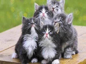 Gatitos mirando al cielo