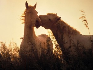 Postal: Amor equino