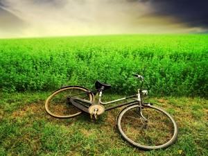 Postal: Bicicleta en la hierba
