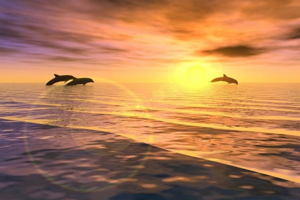 Tres delfines saltando al atardecer