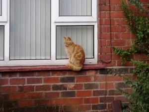 Gato sentado en la ventana