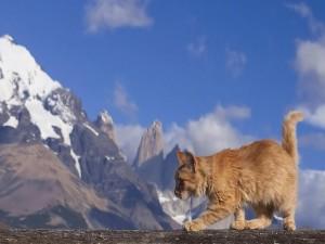 Postal: Gato al borde del abismo