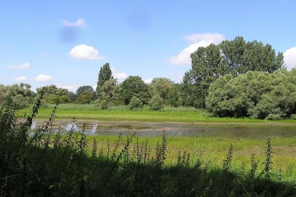 Pantanos del Rin