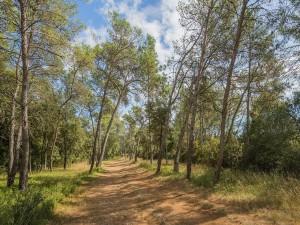 Bosque de pinos (Francia)