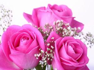 Postal: Rosas color rosa