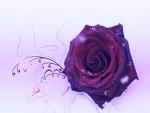 Rosa burdeos