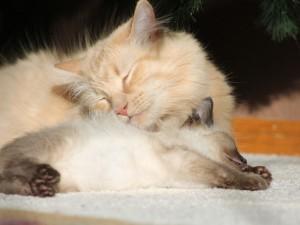 Postal: Gatos dormidos