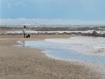 Caminando en la playa junto a su mascota