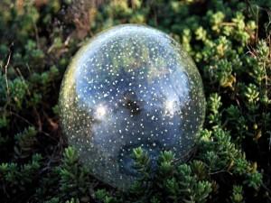 Bola de cristal en los arbustos