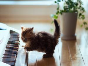 Postal: Gatito tocando el piano