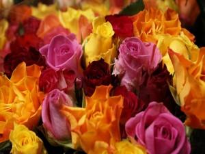 Postal: Rosas en diferentes colores