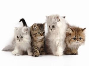 Postal: Cuatro pequeños gatos