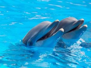Postal: Dos delfines