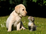 Mirada entre perro y gato