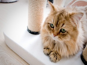 Postal: Gatito con cara triste