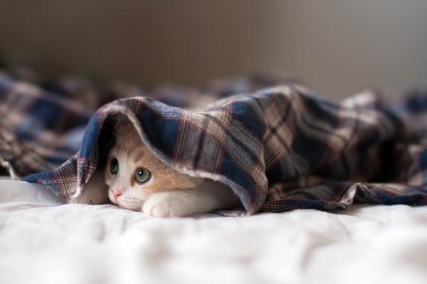 Gatito escondido