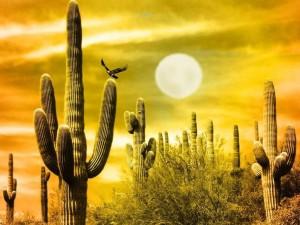 Postal: Cactus al atardecer