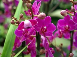 Preciosa orquídea