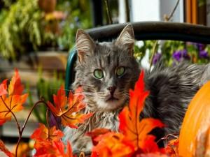 Postal: Gatito entre hojas anaranjadas