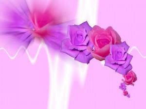 Postal: Rosas moradas y rosas