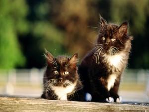 Postal: Dos lindos gatitos