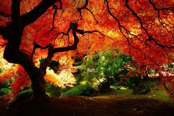 Gran árbol de hojas rojas