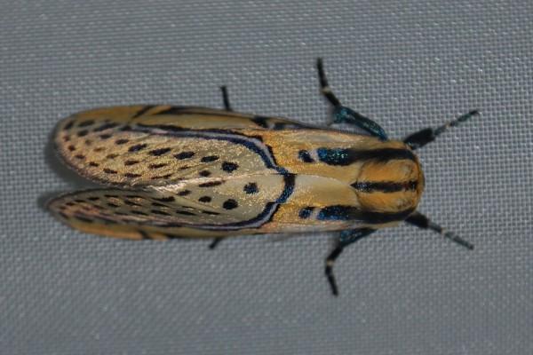 Espectacular insecto
