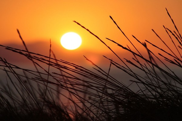 El sol iluminando las hierbas