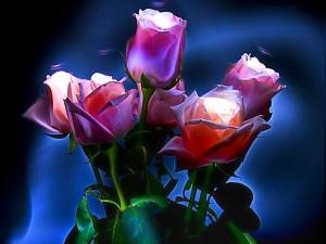 Postal: Rosas y luz