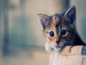 Postal: Gatito asomado