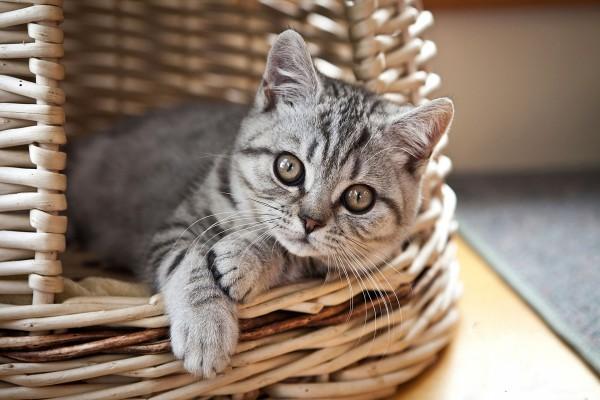 Gatito en una cesta de mimbre
