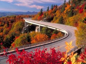 Carretera con árboles en otoño