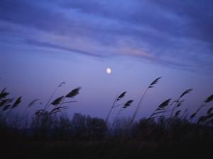 La luna en un cielo azulado