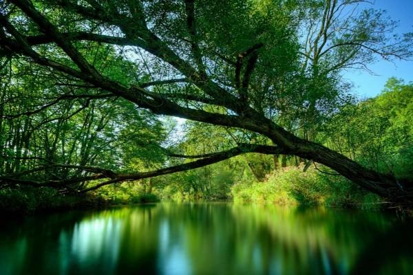 Reflejo de tranquilidad
