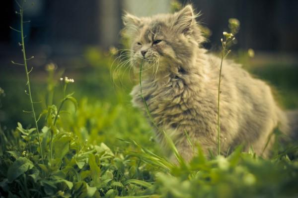 Gatito comiendo hierba