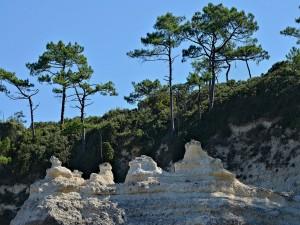 Rocas y pinos