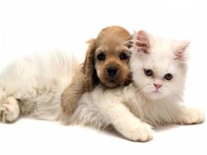 Postal: Cachorro de gato y perro