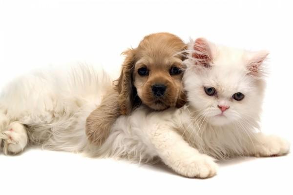 Cachorro de gato y perro