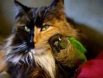 Gato con periquito