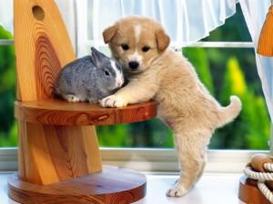 Postal: Perrito y conejo