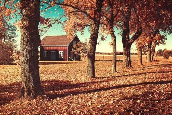 Caída de hojas en otoño