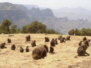 Parque Nacional de Simen, Etiopía