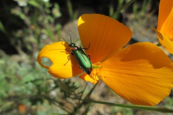 Gran insecto devorando una flor